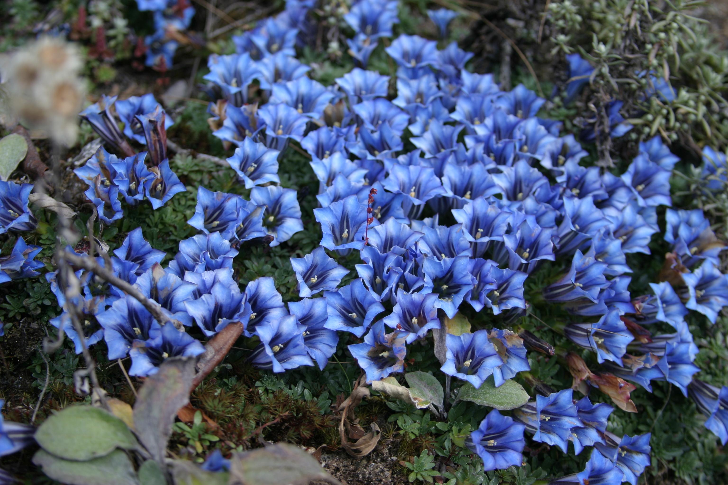 17_flower